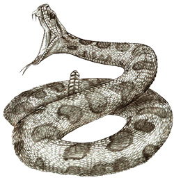 graphic royalty free download Rattlesnake clipart sidewinder. Snake with mouth open.