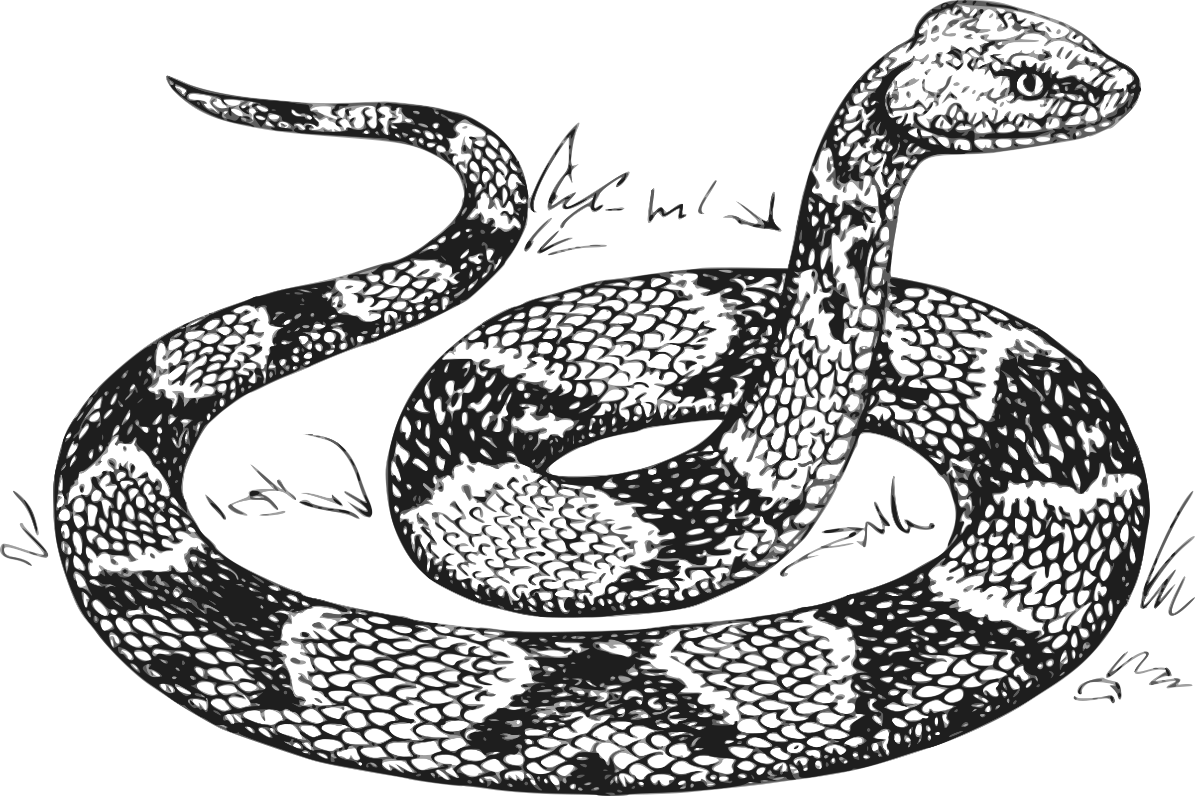 picture black and white download Python Clipart python head