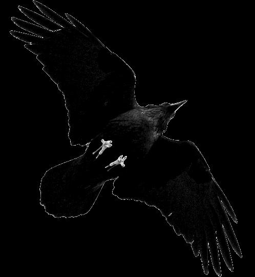clip art freeuse download transparent crow unholy #105512416