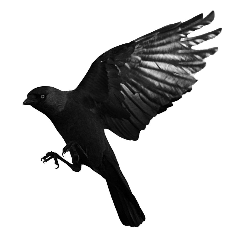 png transparent library Raven flying png mart. Transparent crow stock photo