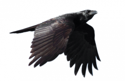 vector freeuse library Raven PNG Images Transparent Free Download