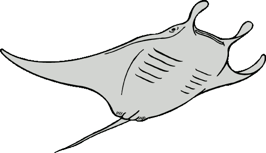 vector stock Stingray clipart black and white.  collection of ray
