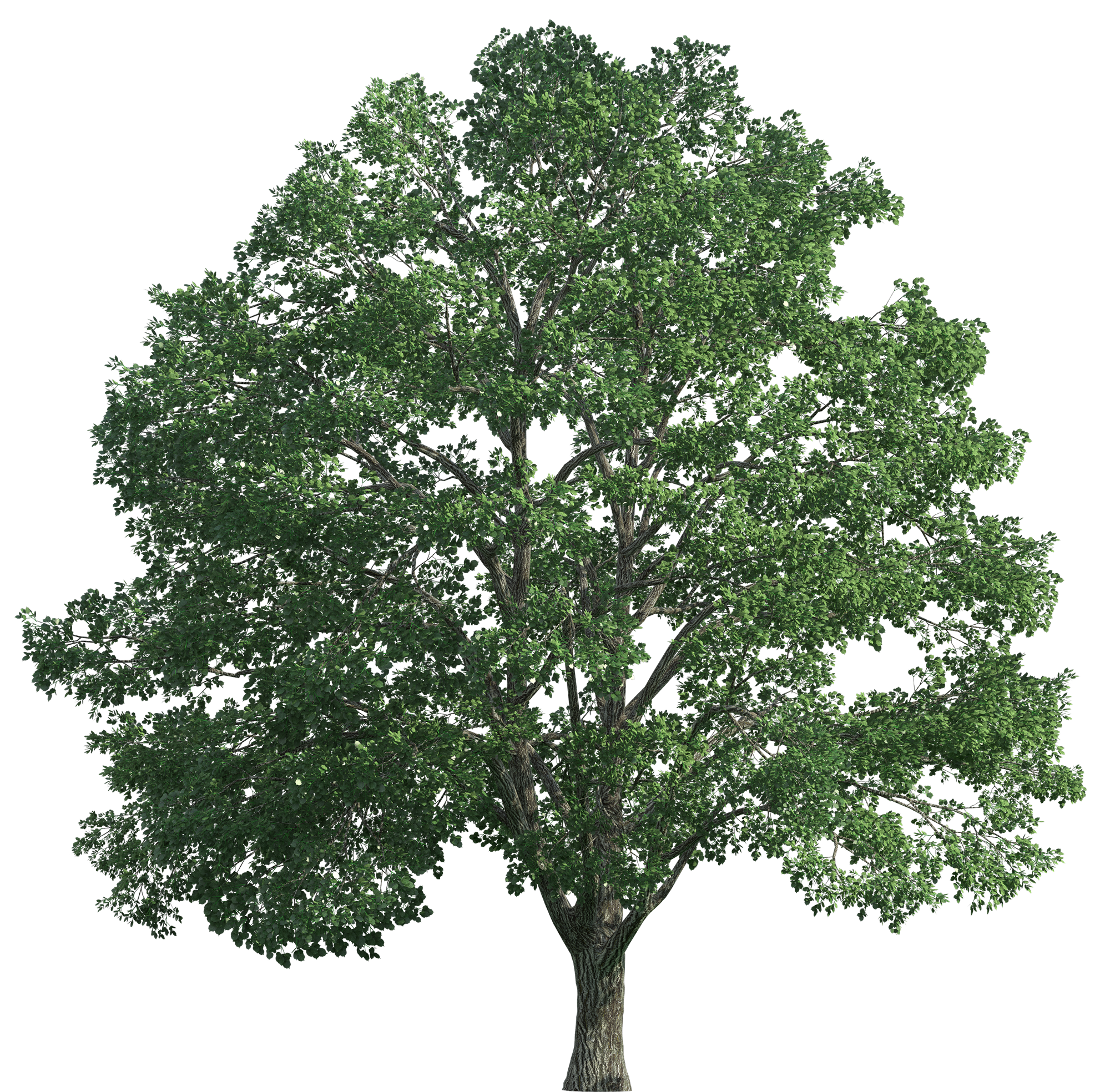 svg royalty free library Tree png clip art. Realistic clipart.