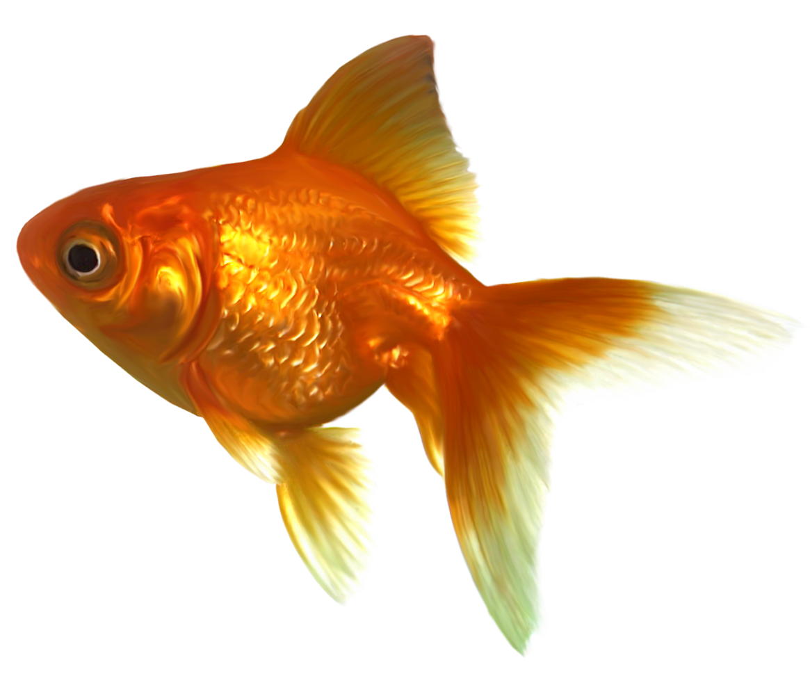 clip art black and white library Realistic png best web. Goldfish clipart dead crow