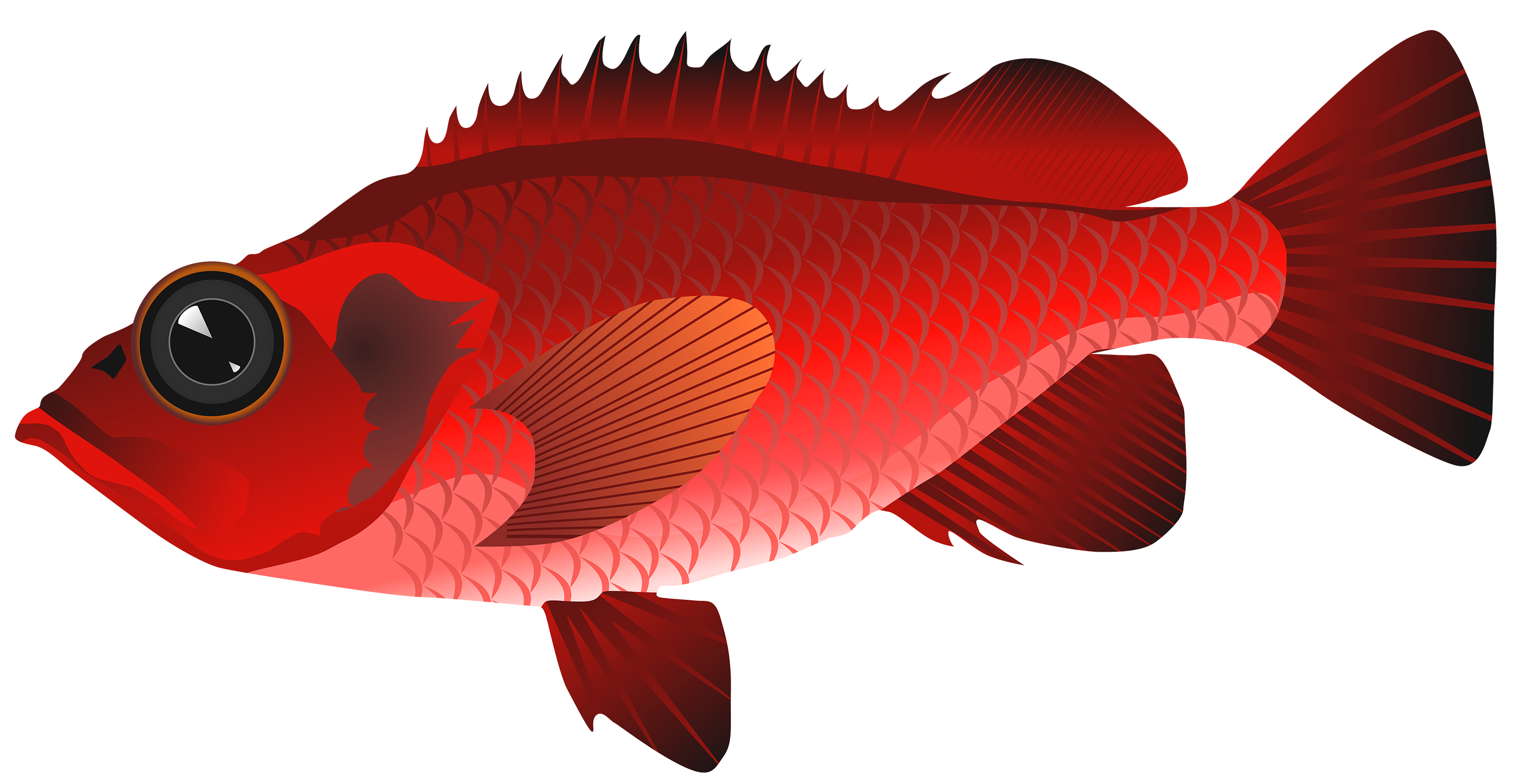 graphic download Realistic clipart. Goldfish free on dumielauxepices
