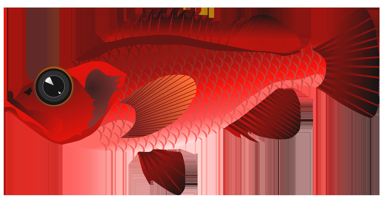 clip art Goldfish Clipart realistic