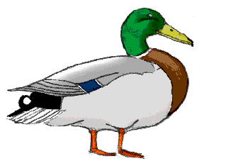 clipart freeuse download Mallard Duck Drawing at GetDrawings