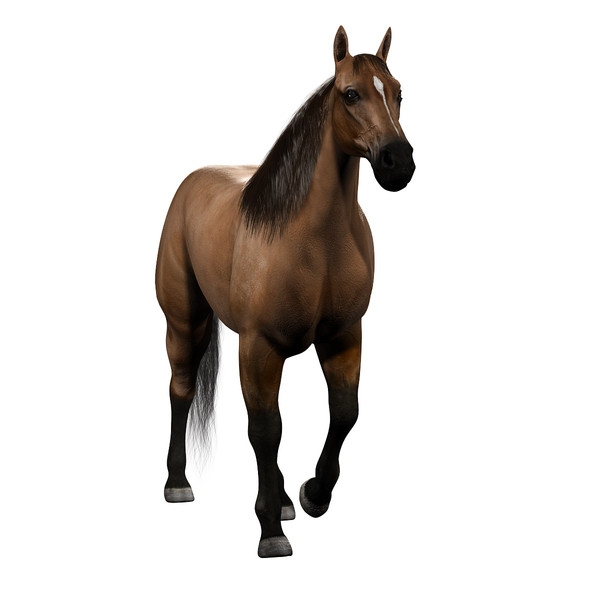 image free Maya animation library . Realistic clipart horse