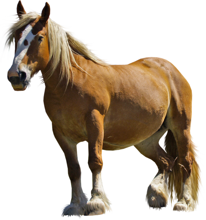 svg library Realistic clipart horse. Png stock by gilgamesh
