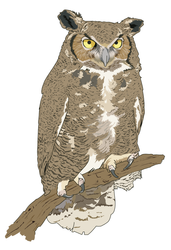 banner Drawing owls realistic. Owl bird clipart
