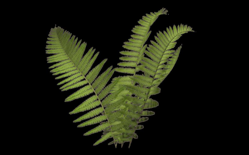 download fern transparent clip art #112802172