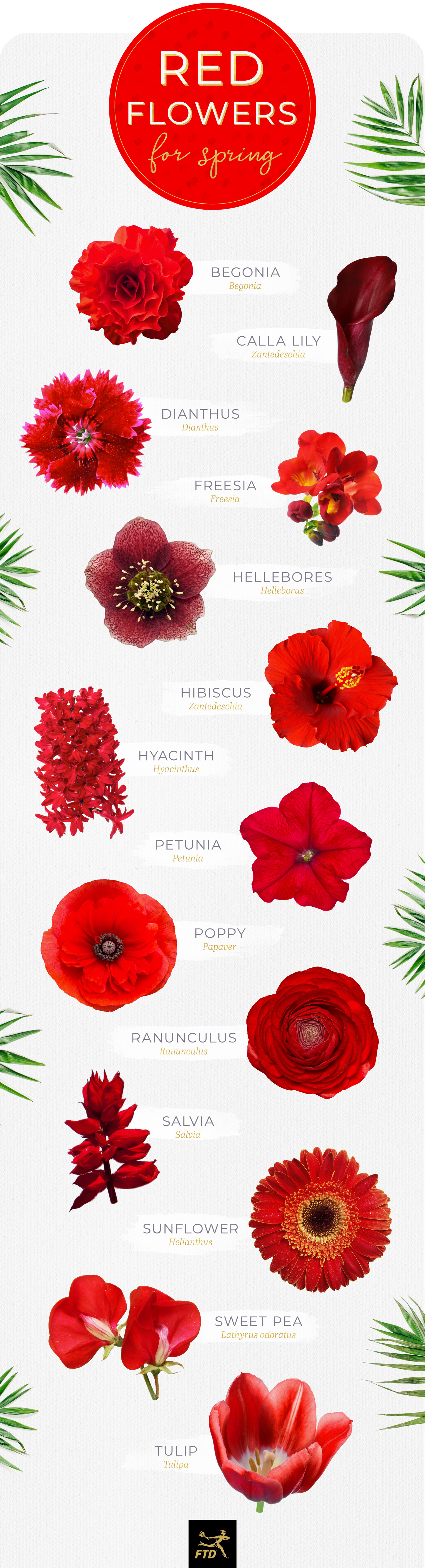 banner transparent download  types of flowers. Red flower