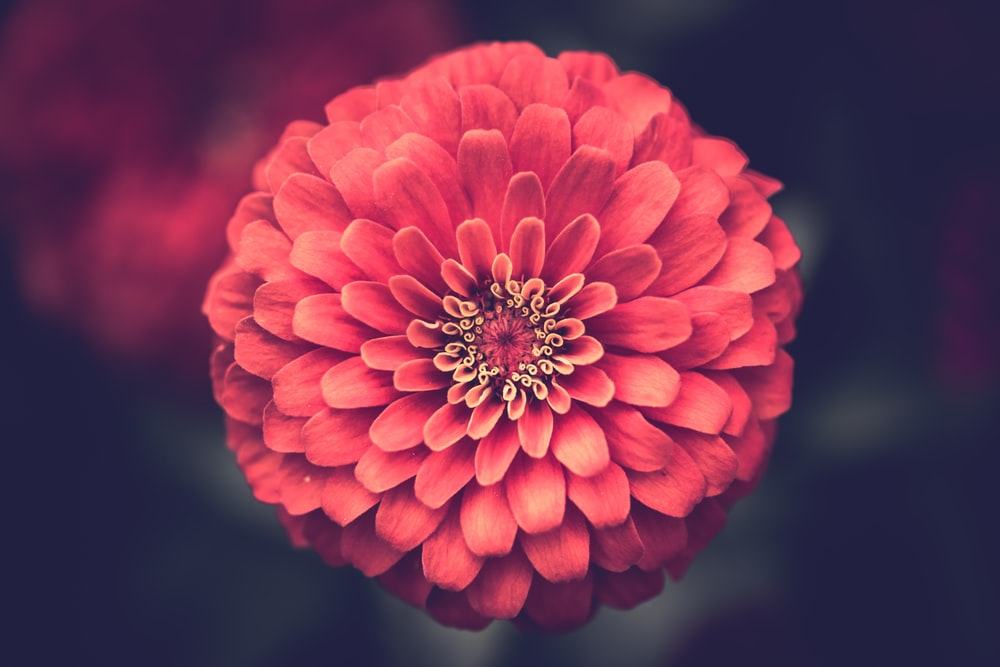 vector transparent download Red flower.  pictures download free
