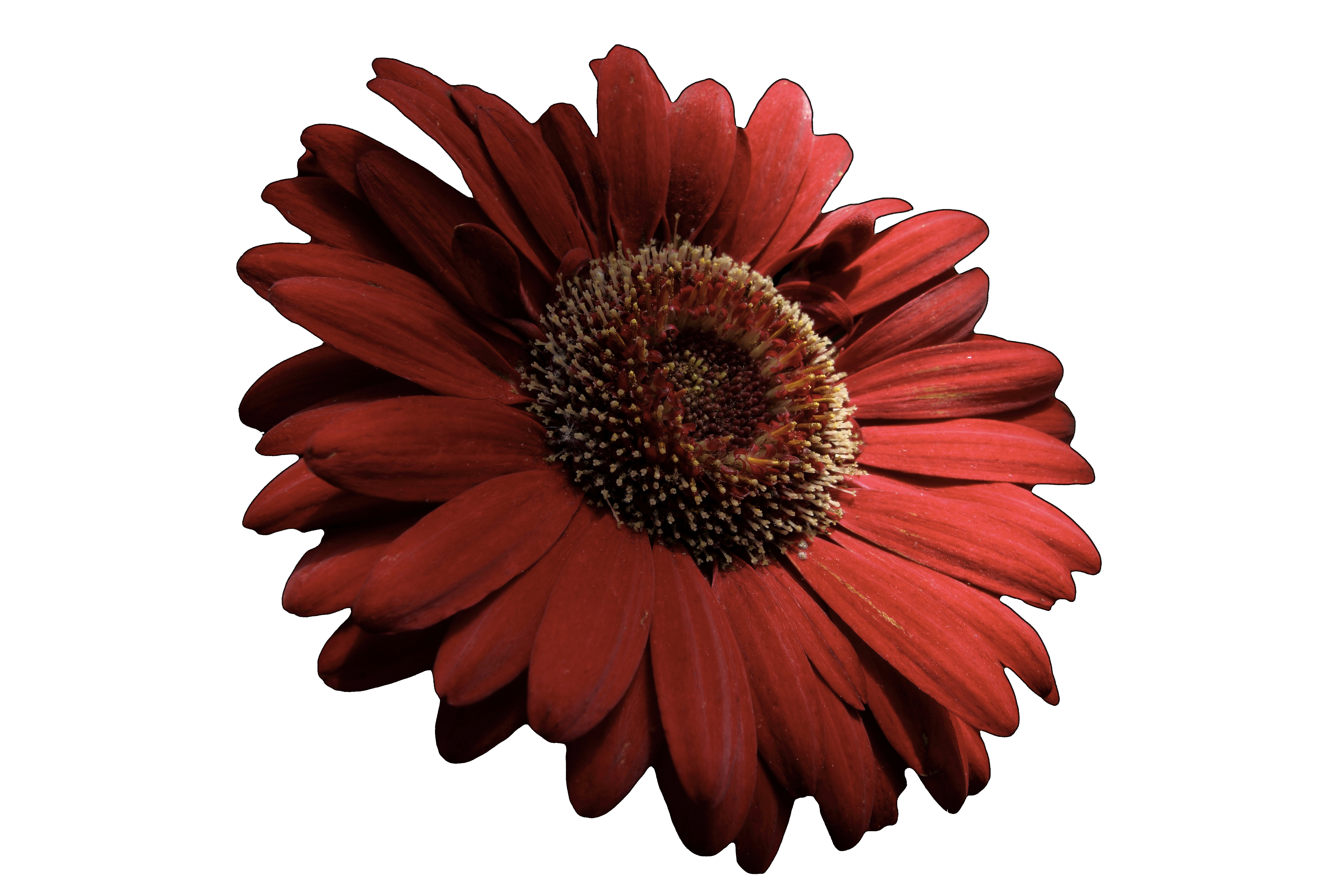 clipart freeuse stock . Red flower