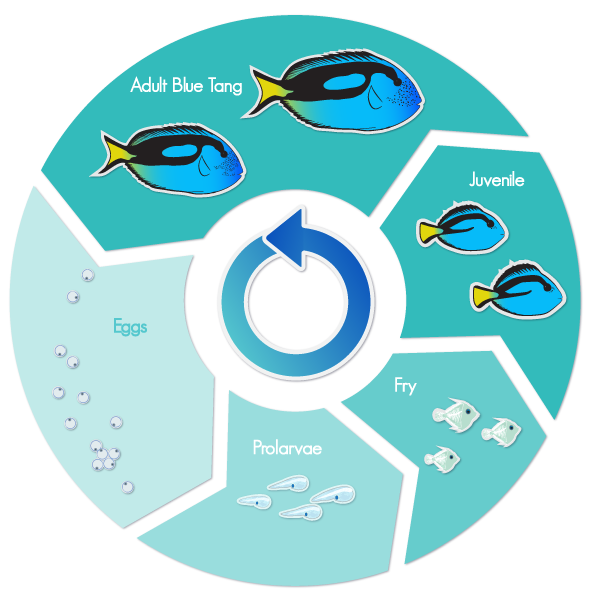 banner freeuse stock Reef clipart aquaculture. Alliance be a part