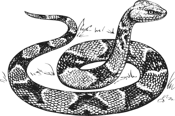 jpg freeuse library Copperhead clip art at. Drawing snake