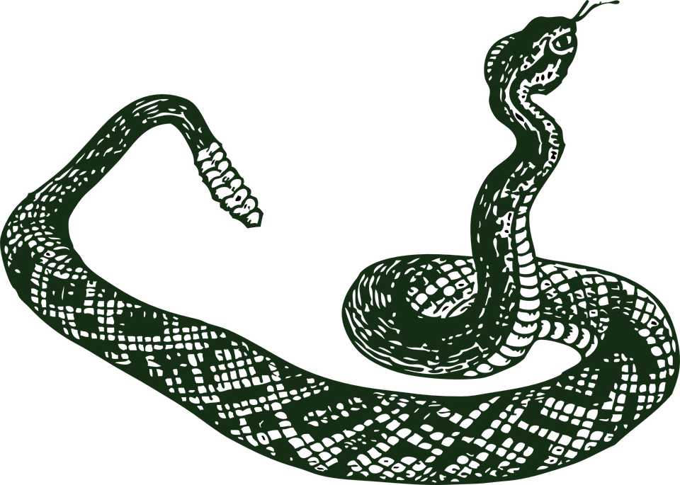 svg transparent download Drawing snake black mamba. Clipart viper free on