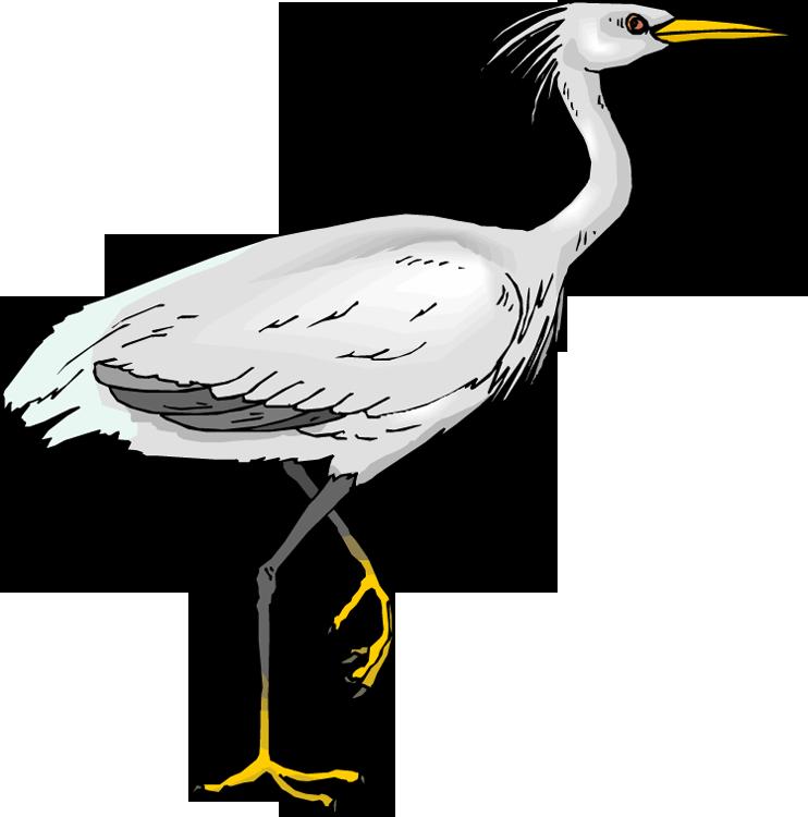 png download Free heron. Reptile clipart swamp bird