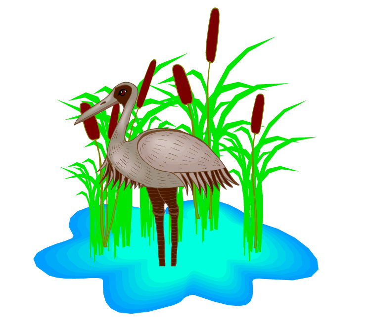 png transparent library Reptile clipart swamp bird. Free heron