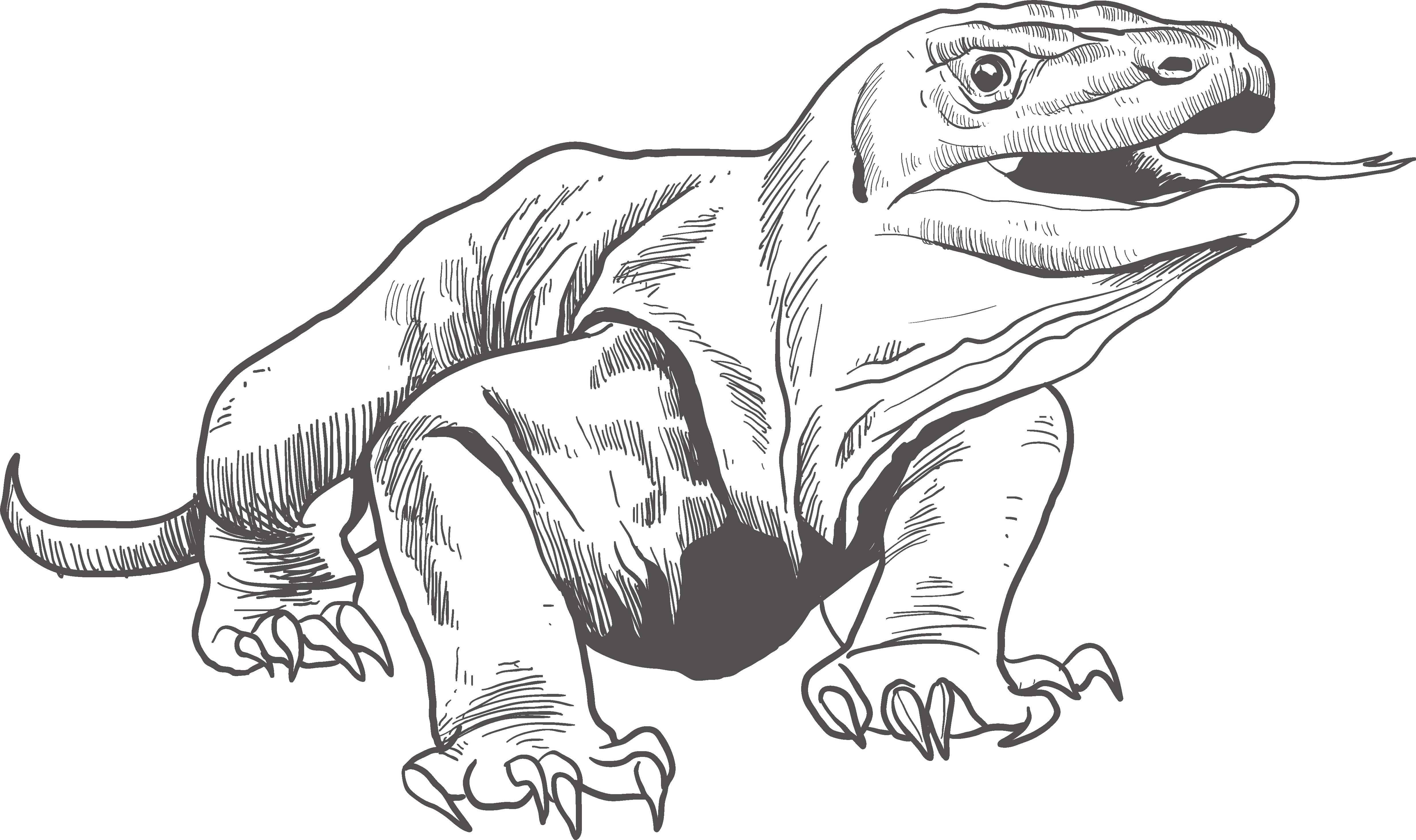banner freeuse stock Reptile Turtle Amphibian Brattle Island Sketch