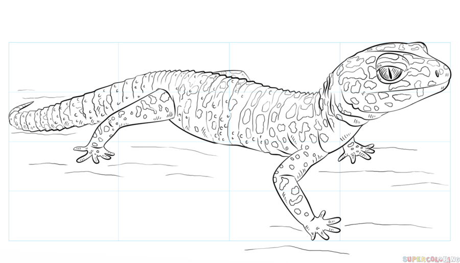freeuse Gecko vector head. How to draw a