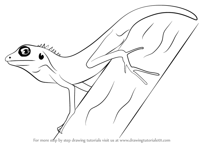 image free stock Learn How to Draw a Changeable Lizard