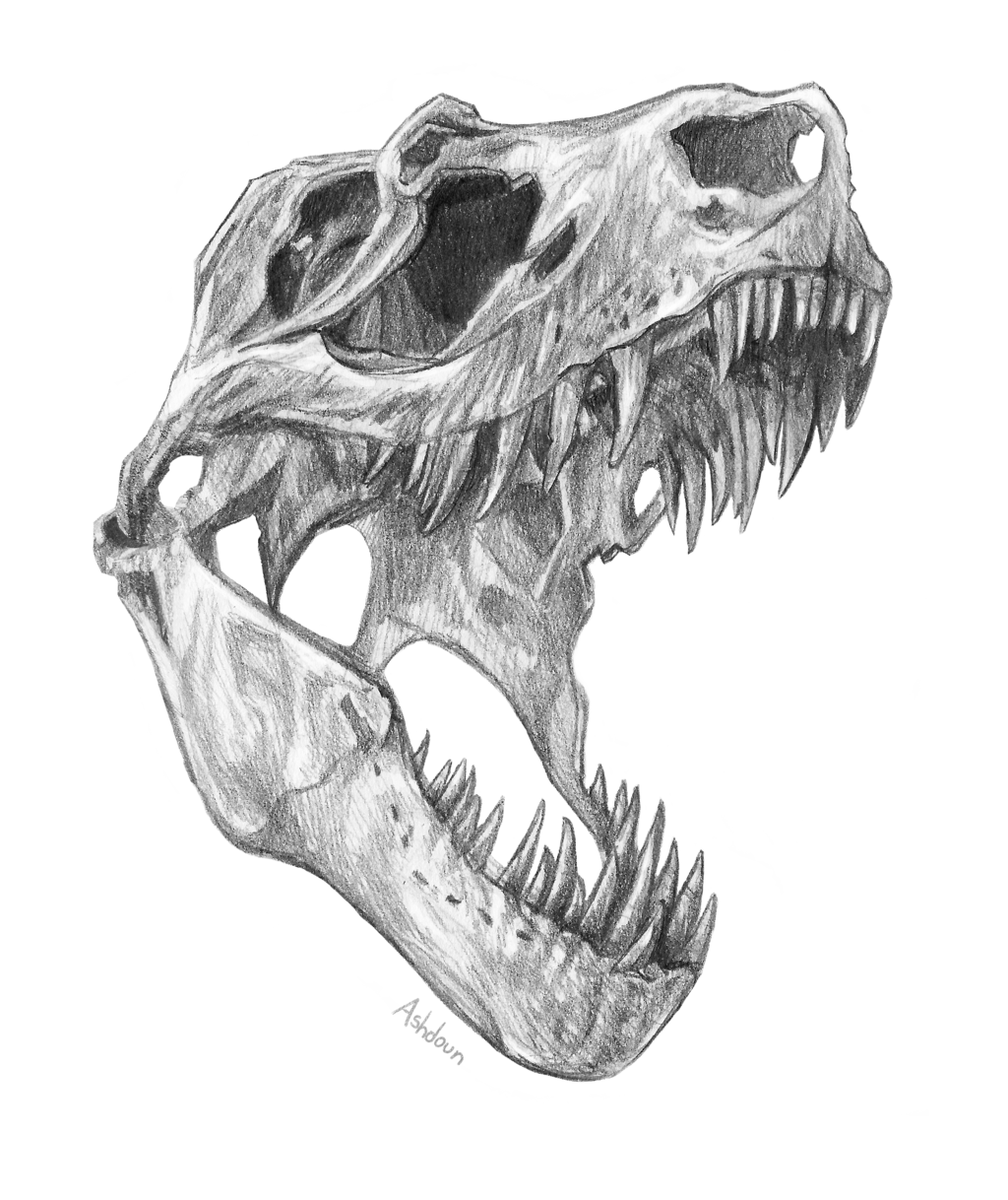 clipart free download t rex pencil drawing