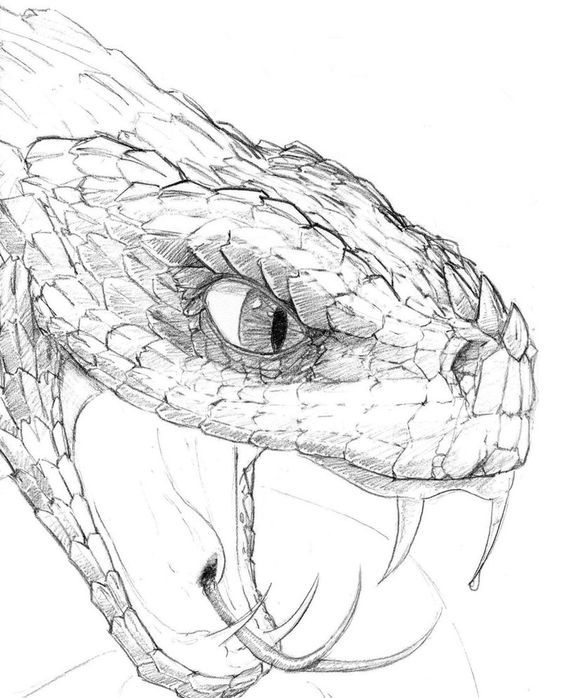 vector freeuse library real drawings of reptiles