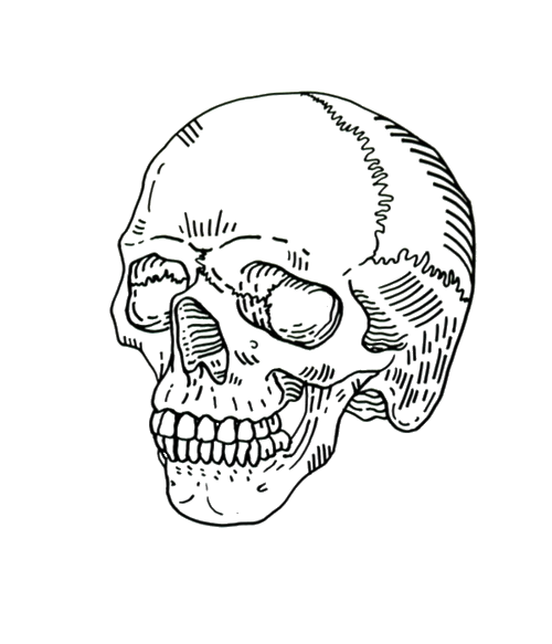 clip black and white library Collection of free Drawing skeleton outline