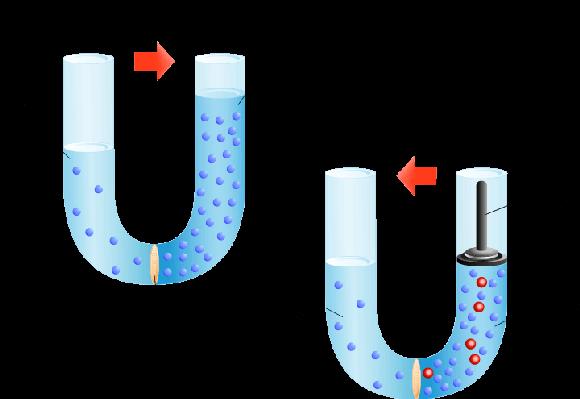 image stock Osmosis PNG Transparent Osmosis