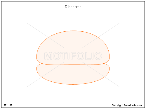picture royalty free Ribosome drawing. Illustrations