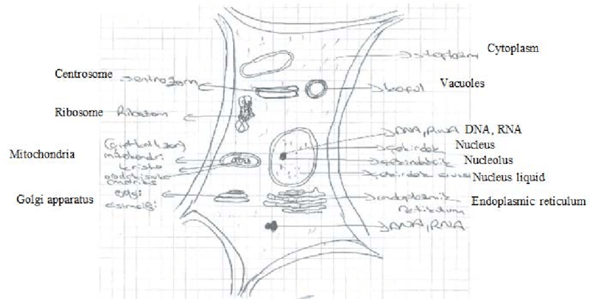 png An example of a plant cell drawing