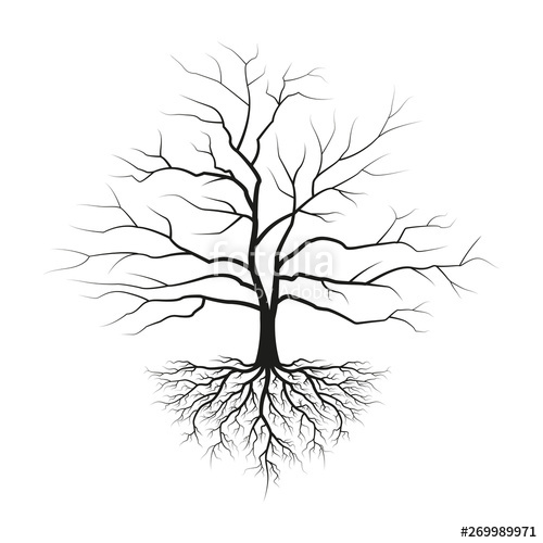jpg free stock Tree with roots and without leaves