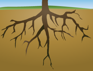 png free download Roots clipart. Free cliparts download clip.