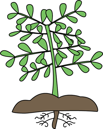 clip royalty free download Plant with Roots Clip Art