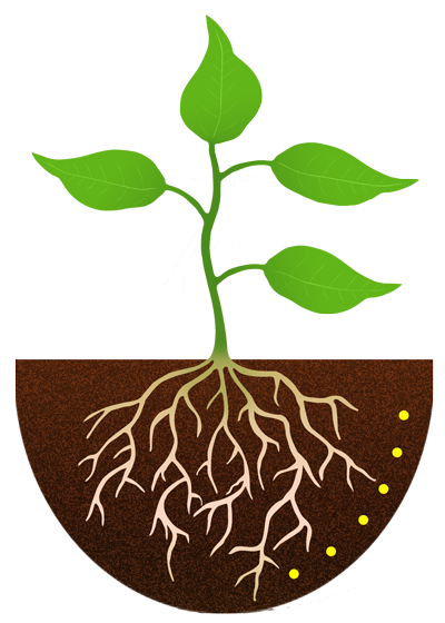 free stock plant with roots