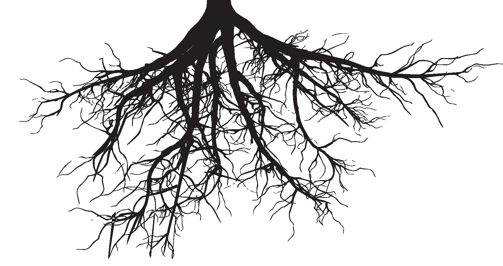 graphic royalty free library roots transparent background #102412255