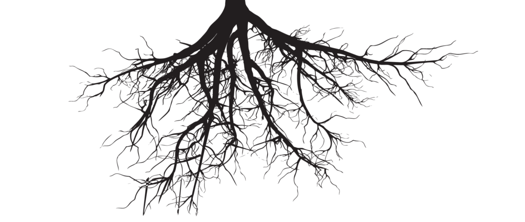 png black and white library Collection of free Roots drawing oak tree