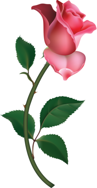 clip transparent library Large Pink Rose Bud Painting PNG Clipart