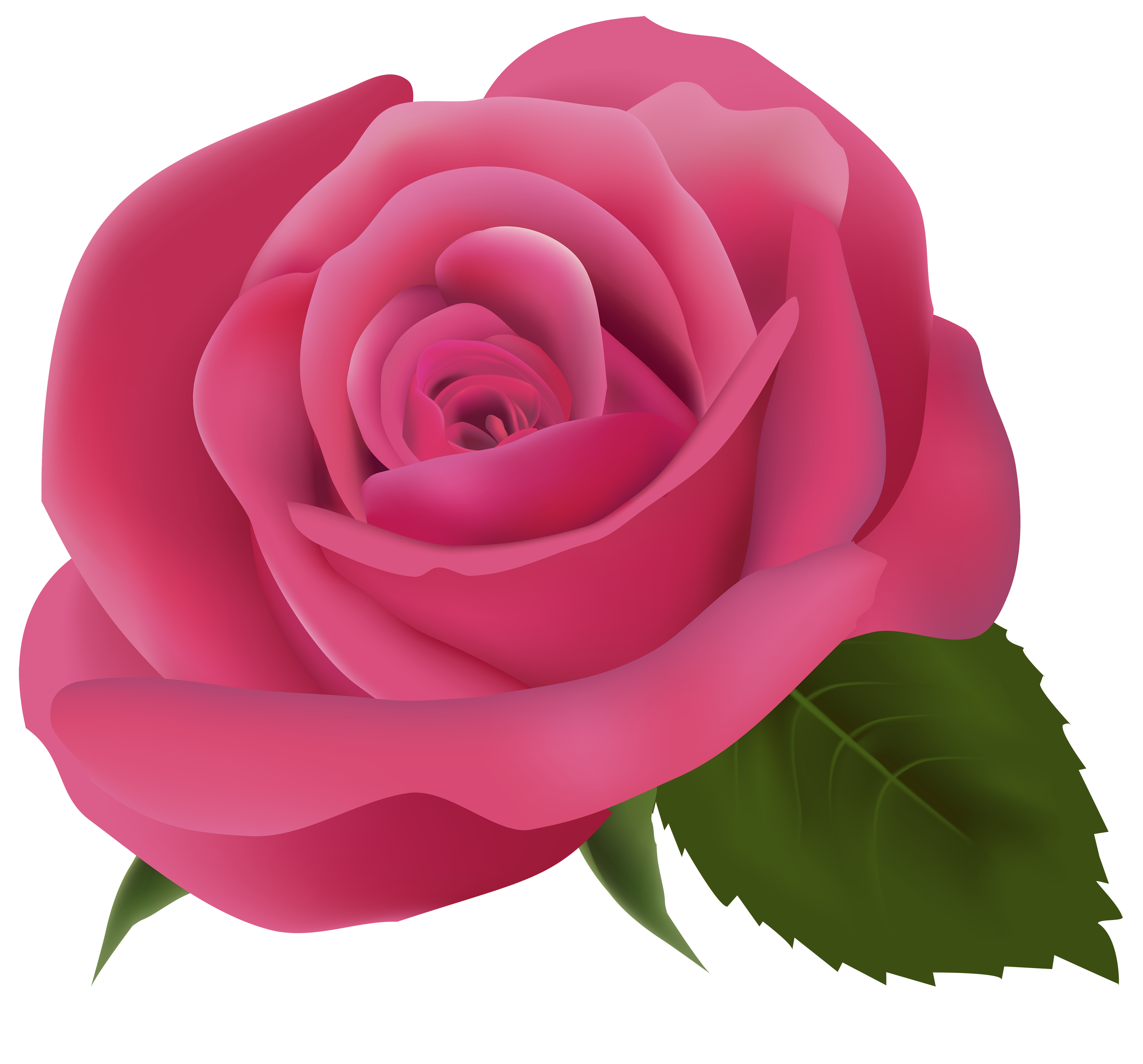 banner library stock Rose clipart. Pink png image best.