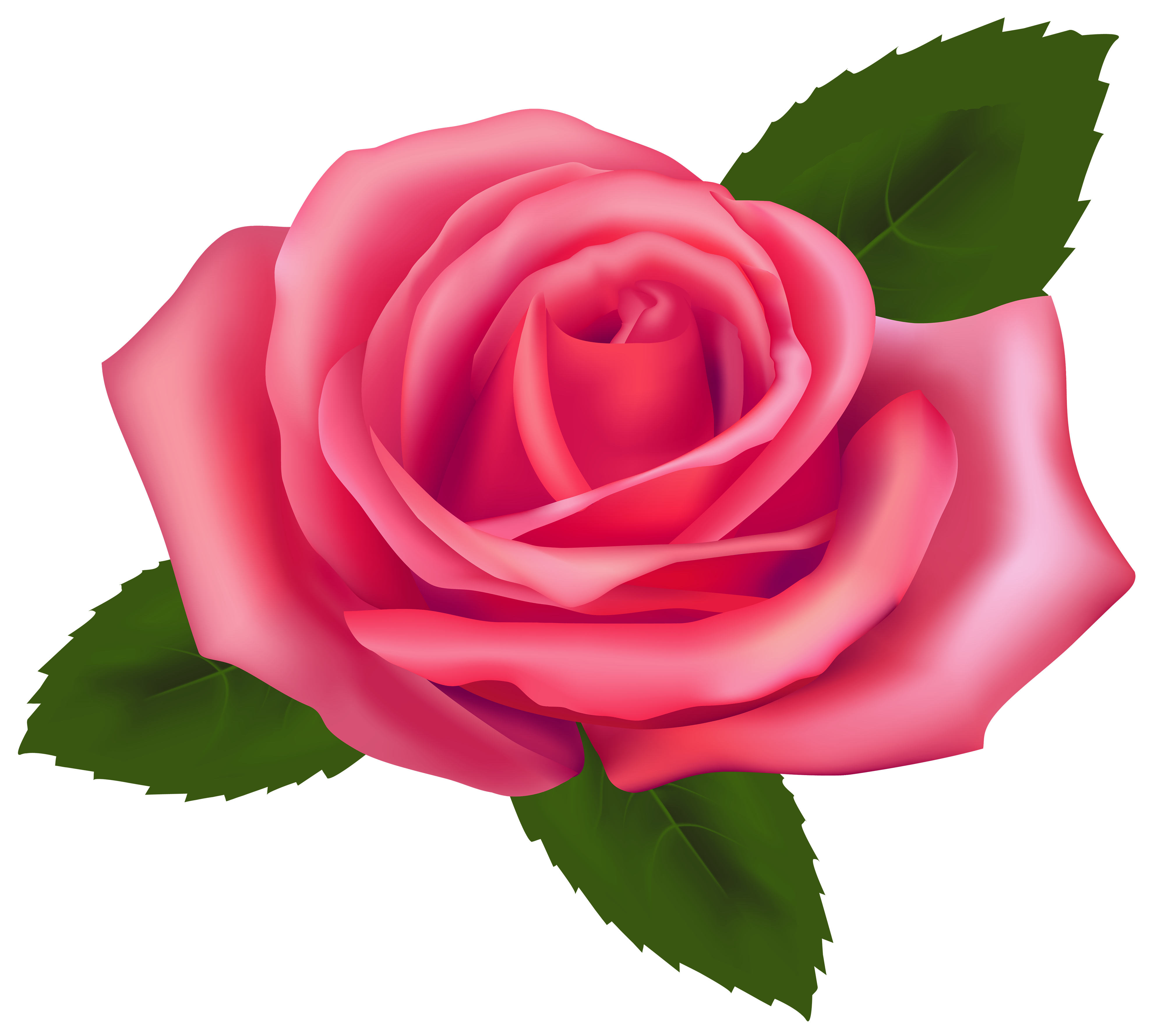 svg stock Beautiful pink png best. Rose clipart.