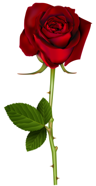 jpg freeuse stock Red Rose PNG Transparent Image