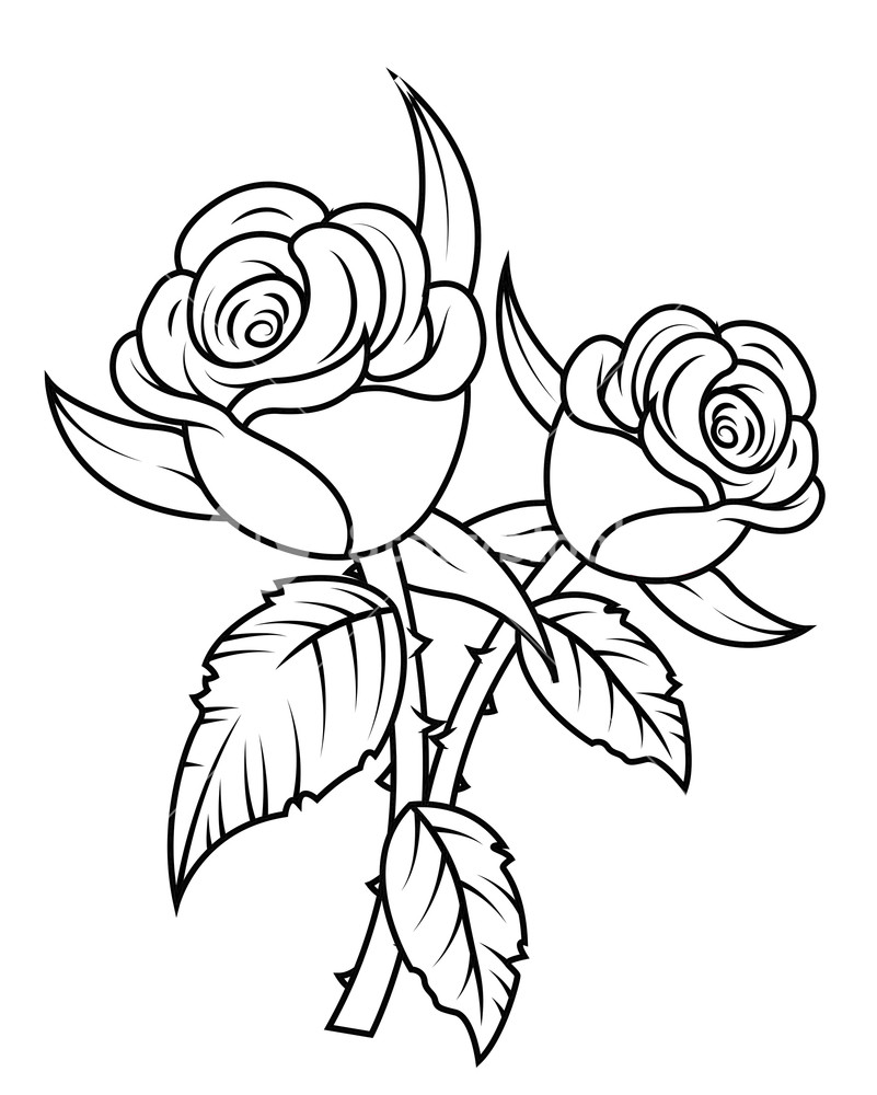 banner royalty free Flowers royalty free stock. Rose flower clipart