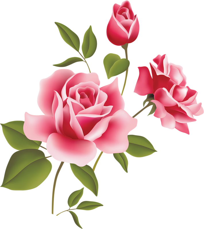 png library stock Pink Rose Art Picture Clipart