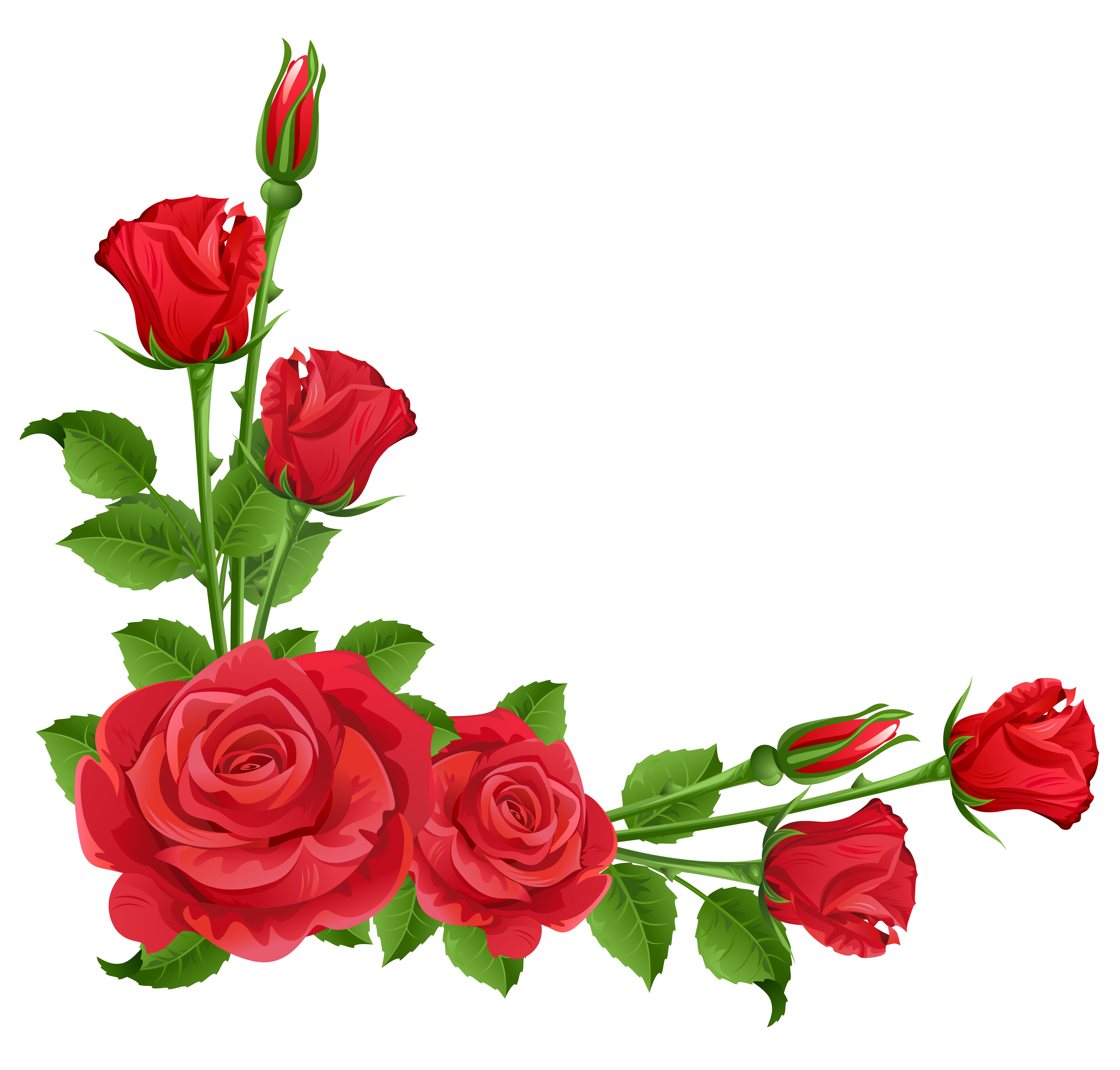 clip Red Roses Transparent PNG Clipart