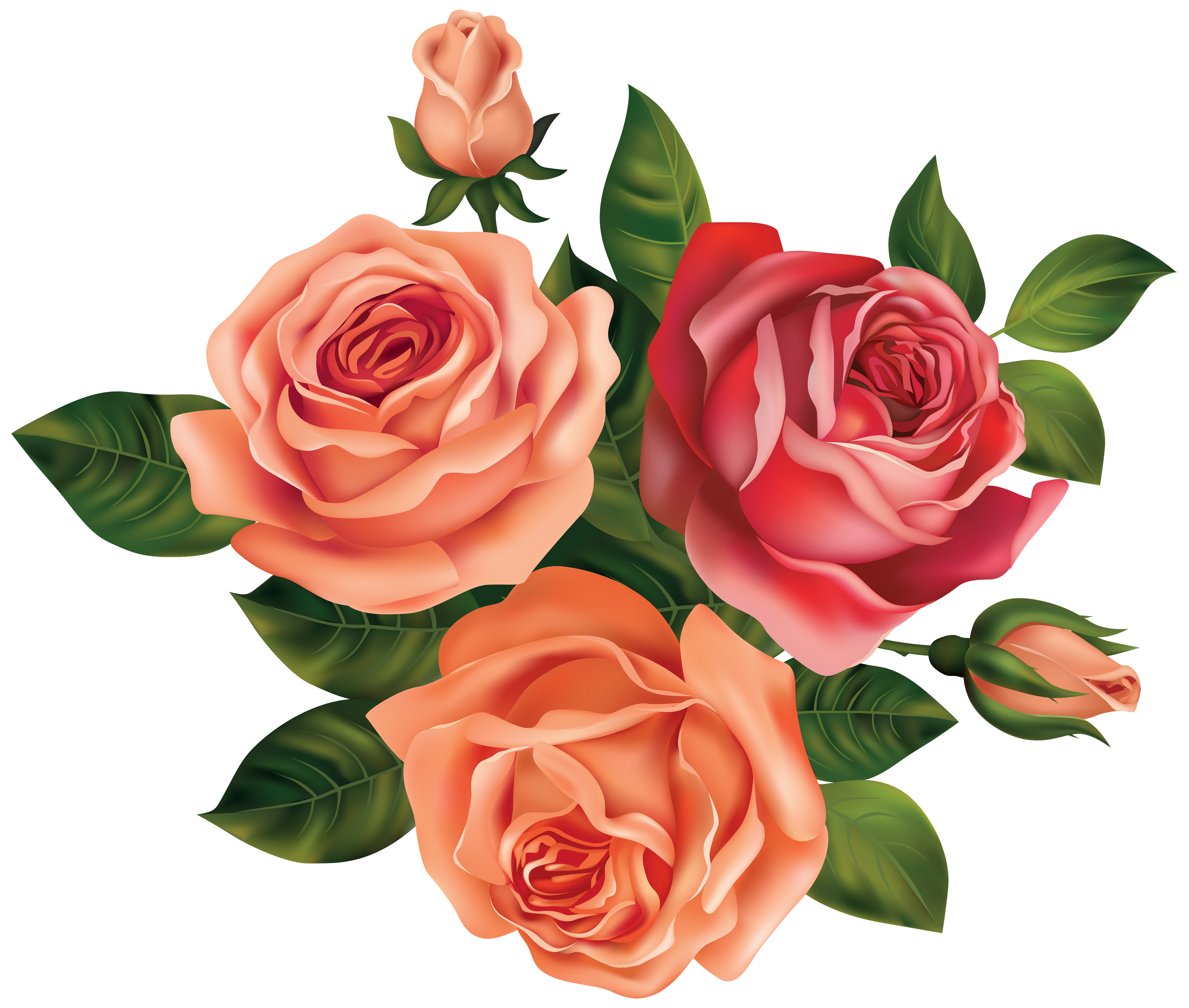 graphic transparent stock Beautiful image gallery yopriceville. Roses clipart.