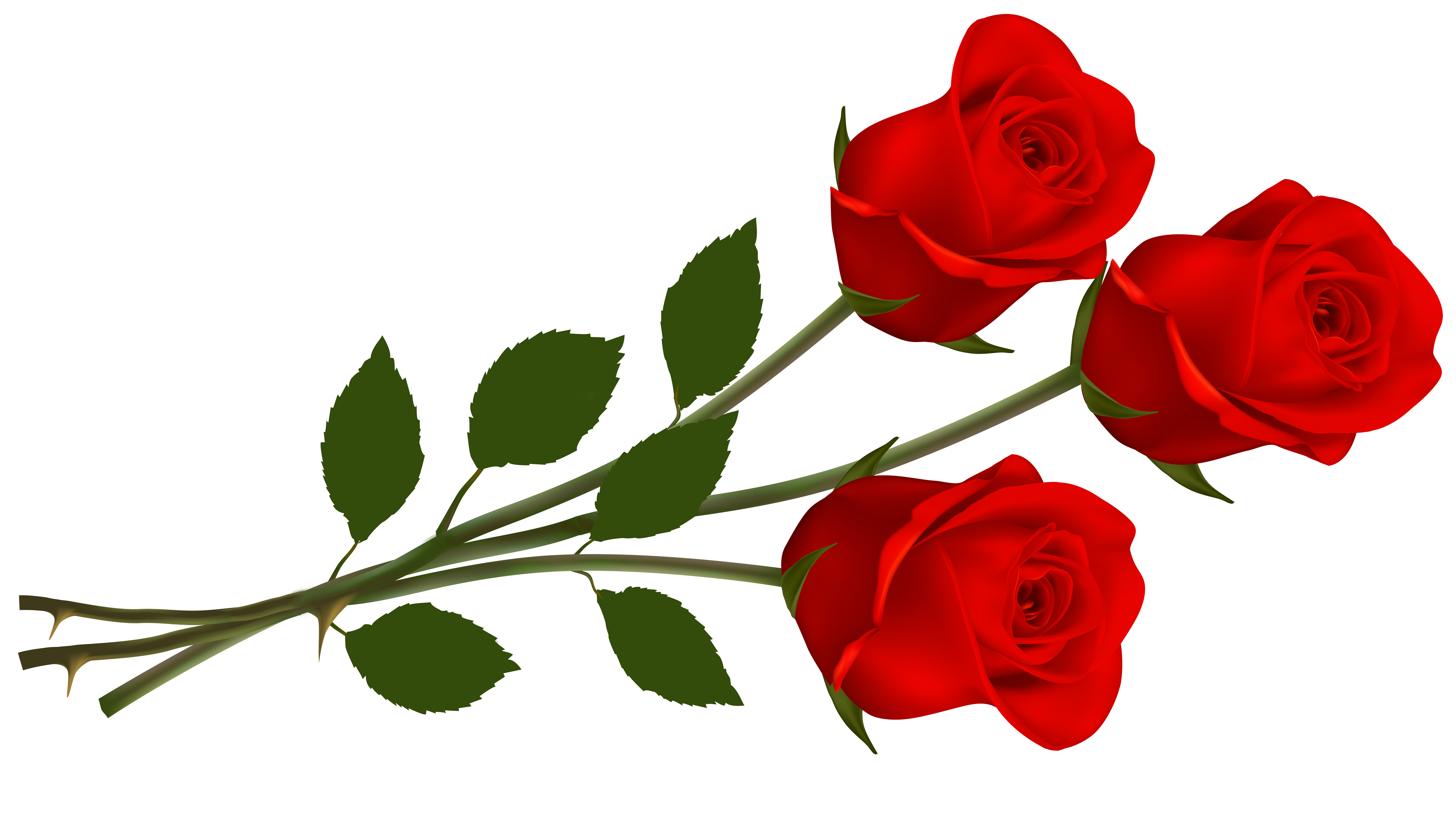 picture Single rose clipart. Clip art red roses