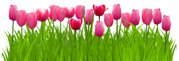 vector Grass with Pink Tulips PNG Clip Art Image