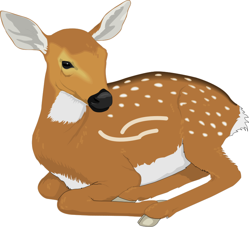 picture freeuse stock Deer clip art panda. Royalty free clipart