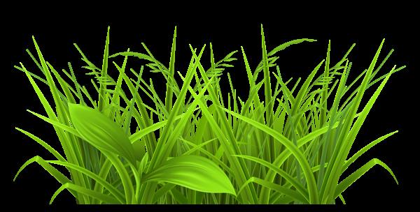 png stock barley drawing grass #92176678